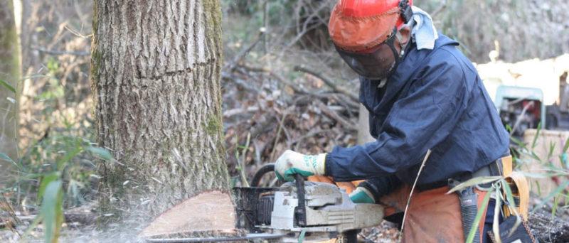 全ての伐倒において、受け口は重要事項の一つ。正確な伐倒に妥協は許されません!