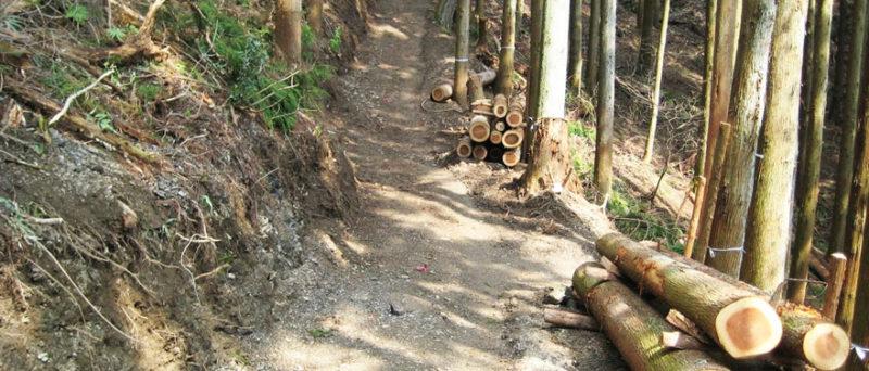 間伐及び先行伐採で伐倒された材は、造材し作業道の道脇に集積しておく。この後、森林作業道を使って搬出される。