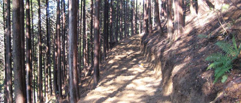 現時点における森林作業道の道幅は 2.5m で作られている。単に掘っていく訳ではなく、雨水対策も施していなければならない。