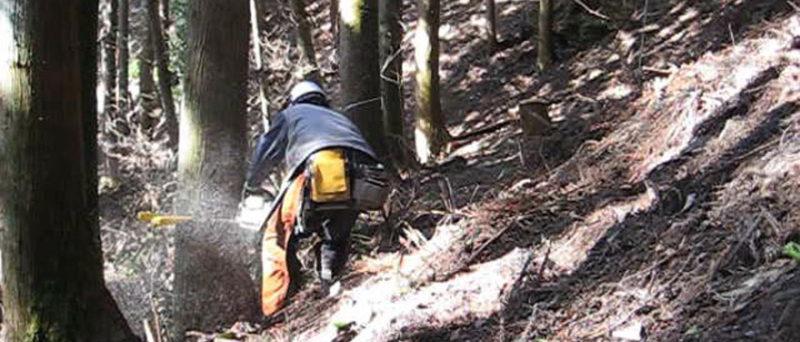 間伐作業と異なり、作業道を開ける状況により倒す方向が決まってくる。そんな時にはクサビ(矢)を用いて安全な伐倒作業を行う