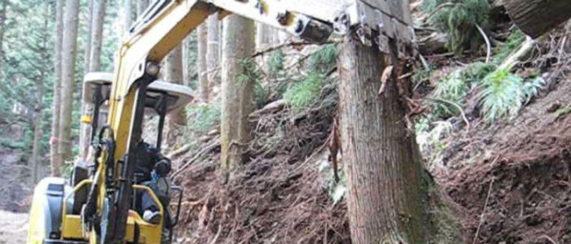 伐倒が終われば、次に根株を抜かなければならない。樹種・地形により根の張り方が異なる為、熟練が求められる。抜かれた根株は路肩補強にも用いられる