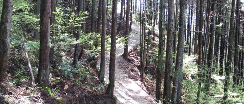 この様な作業道を入れていく事により、今まで機械が入る事が出来なかった山林に繋がる事が可能となる
